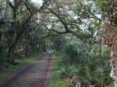 Myakka River State Park, located east of Sarasota,