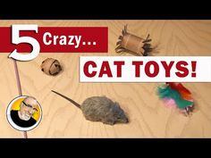 5 Crazy Cat Toys You Can Make! - YouTube