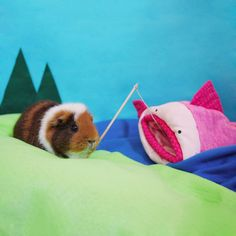 The Adventures of Fuzzberta and MiniGuineaPig