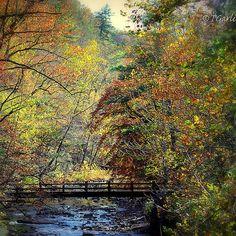 untitled autumn