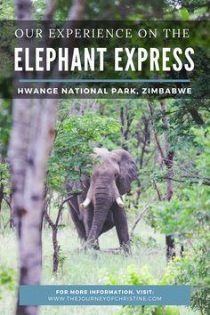 Our Experience on Imvelo's The Elephant Express // Hwange National Park, Zimbabwe