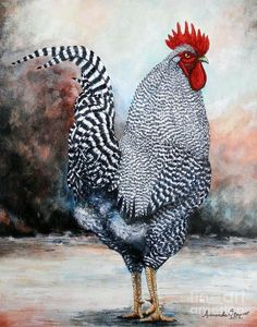 Barred Rock Rooster Art Print by Amanda Hukill. All prints are professionally printed, packaged, and shipped within 3 - 4 business days. Choose from multiple sizes and hundreds of frame and mat options. More farmhouse pillow covers at The Swanky Rooster. Fancy Chickens, Chickens And Roosters, Chickens Backyard, Rooster Painting, Rooster Art, Hen Chicken, Chicken Art, Chicken Animal, Chicken Coops