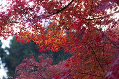 Фотография The last colored leaves автор Masao Kano на 500px