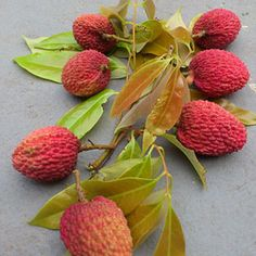 Lychee at Pine Island fruit market Summer weekends 10-4pm Get there early They have mango smoothies made from Pine Island mangos