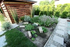 zioła w ogrodzie - Szukaj w Google
