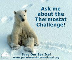 Save our sea ice. Polar Bears International, Vulnerable Species, Apex Predator, Sea Ice, Love Bear, Animal Kingdom, Arctic, Mammals, Habitats