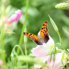 Love butterflies