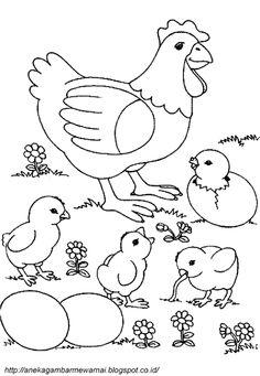 Aneka Gambar Mewarnai - Gambar Mewarnai Ayam Untuk Anak PAUD dan TK.   Pelajaran menggambar dan mewa...