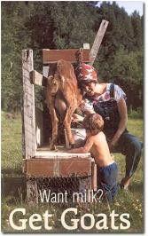 Goat Milk!!!  I have a new addiction; goat milk.  I love it!
