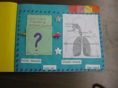 Foldable - the Human Body System