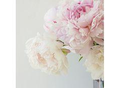 Photo de pivoines, pivoines Print, Decor mural Chic minable, photographie de fleur