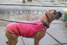 Список продуктов, которые можно заморозить на зиму | Тысяча и одна идея Dogs, Animals, Animales, Animaux, Pet Dogs, Doggies, Animal, Dog, Animais