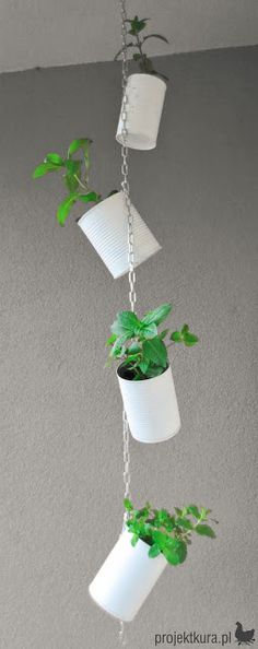 DIY hanging garden