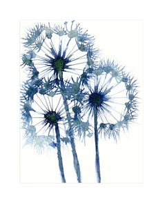 """Ethereal Dandelions"" - Art Print by Me Amelia in beautiful frame options and a variety of sizes."