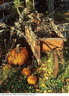 Antique Wooden Wheelbarrow...bittersweet and pumpkins.