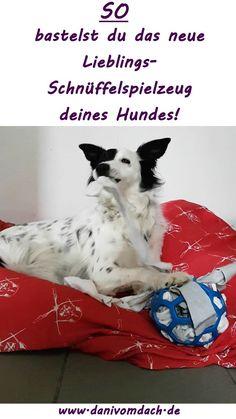Ein einfacher Gummiball ist deinem Hund zu langweilig? Unserem auch! Deshalb haben wir unseren aufgepimpt!