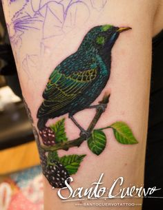 Starling Tattoo by Alex Alvarado. Vegan friendly tattoo and piercing studio in Hackney, North London. Specialised in modern tattoos, such as watercolour, realism and geometry.