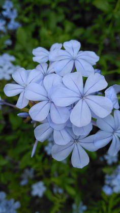 Bu gün de böyle olsun. Evimizin bahçesindeki güzellik...  🌻🍃🌿🌱🍀🌸