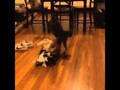 Juni Demonstrates An Impressive Evasive Maneuver - YouTube