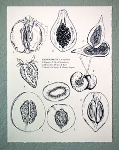 Vagina Fruits Drawing, 8x10 by JunebugandDarlin on Etsy https://www.etsy.com/listing/467011421/vagina-fruits-drawing-8x10