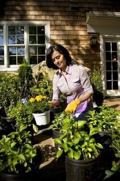 organic ways to get rid of spider mites