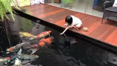 Inspirational Koi Pond Design Ideas Whilst age-old within concept, a pergola may be enduring somewhat Fish Pond Gardens, Koi Fish Pond, Garden Pond, Koi Ponds, Outdoor Fish Ponds, Ponds Backyard, Garden Design Plans, Garden Landscape Design, Funny Animals