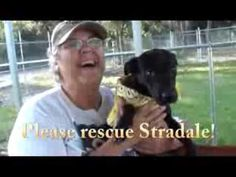 Please rescue sweet Stradale!