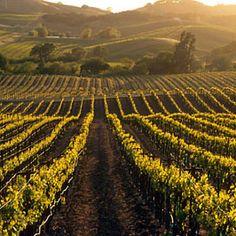 Love the vineyards in Napa