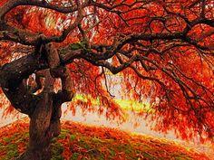 Autumn Tree wallpaper - ForWallpaper.com