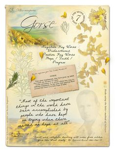 Gorse Bach Flower Picture Card