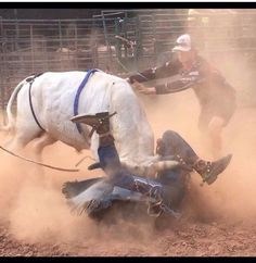 Almost almost got the family Jewel's. Cowboy Horse, Cowboy And Cowgirl, Horse Riding, Cowboy Pics, Cowboy Art, Rodeo Cowboys, Real Cowboys, Rodeo Events, Bucking Bulls