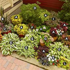 coleus (Solenostemon scutellarioides) Mother-in-law's tongue (Sansevieria trifasciata) Polka-dot plant (Hypoestes phyllostachya) Laceleaf Japanese maple (Acer palmatum dissectum 'Viridis') Variegated hosta (Hosta spp. Sansevieria Trifasciata, Shade Landscaping, Small Backyard Landscaping, Corner Landscaping Ideas, Shady Backyard Ideas, Acreage Landscaping, Landscaping Around Trees, Backyard Garden Landscape, Desert Landscape