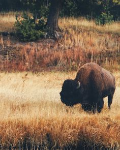 5 REASONS TO VISIT YELLOWSTONE NATIONAL PARK   Click to find out!