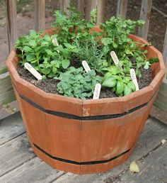 Herb garden in a barrel. This is what I'm envisioning for my herb garden :)