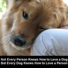 Dogs love us with an unconditional love . Just wish people could love others like God does...<3