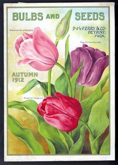 seed packet #printables #ephemera #tulips