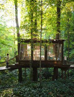 in the backyard...what a tree house