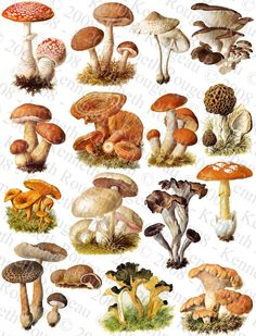 Recipe Source Online: Eight Different Types of Mushrooms and Their Benef...