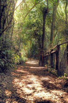 São Paulo - Parque Alfredo Volpi, com remanescente de Mata Atlântica - Pesquisa Google