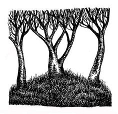a trio of trees - great illustration work for painted backdrop - simple and effective line work