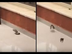 Bird Saves Its Friend With 'Kiss Of Life' After Flying Straight Into Window