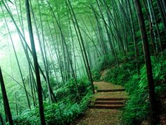 Bamboo Forest | the Bamboo Forest Wallpapers, Bamboo Forest Desktop Wallpapers, Bamboo ...