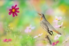 Looking At a Flower  by FuYiChen via http://ift.tt/2e7BWdL