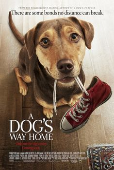Title:A Dog's Way Home Director:Charles Martin SmithWriters:W. Bruce Cameron (screenplay by), Cathryn Michon (screenplay by)Stars:Bryce Dallas Howard, Ashley Judd, Alexandra Shipp Genres:Adventure Hindi Movies, All Movies, Home Movies, Movies Online, Movies And Tv Shows, Movies Free, Latest Movies, Action Movies, Ashley Judd