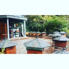 Visit the beautiful bee hives at Jardin Du Luxembourg in Paris to get close to your favorite flyers. There's even a Bee Keeping school that's been running since 1856!  #savethebees #beehives #paris #ruche #honey #miel #beekeeping #citybees #flora #fauna