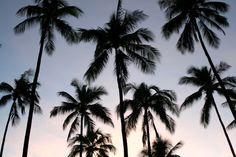 scarface palm tree mural Google Search M I A M I