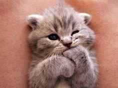 Когда думал, что растрогать тебя невозможно, вдруг видишь фото этих котят