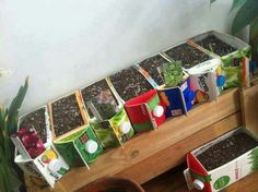 Recycled cartons into planters/seed starters.