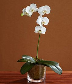 single stem white orchid  single stem white orchid: day orchid decor