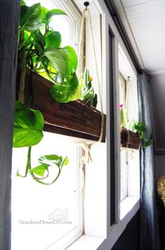 indoor window boxes with leafy greens. | home | pinterest | indoor